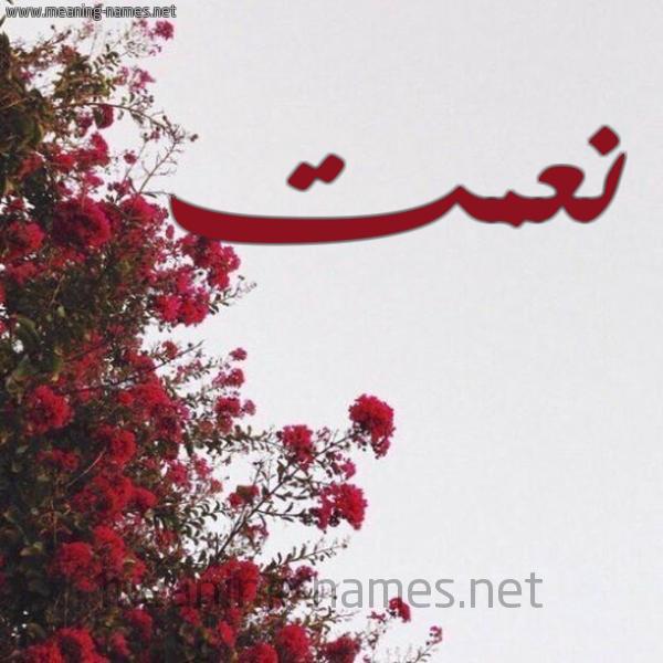 شكل 18 صوره الورد الأحمر للإسم بخط رقعة صورة اسم نعمت NAMet