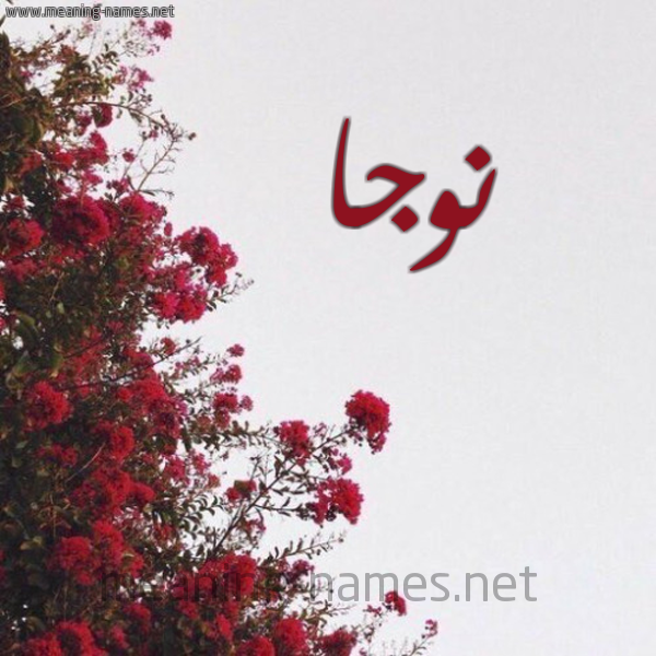 صورة اسم نوجا Nwja شكل 18 صوره الورد الأحمر للإسم بخط رقعة