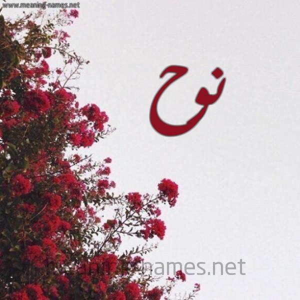صورة اسم نوح Nooh شكل 18 صوره الورد الأحمر للإسم بخط رقعة