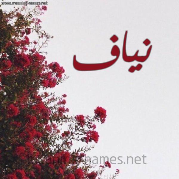 صورة اسم نياف Nyaf شكل 18 صوره الورد الأحمر للإسم بخط رقعة