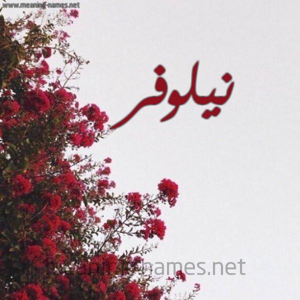 شكل 18 صوره الورد الأحمر للإسم بخط رقعة صورة اسم نيلوفر Nylwfr