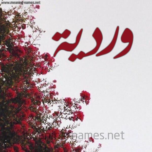 صورة اسم وردية WARDIA شكل 18 صوره الورد الأحمر للإسم بخط رقعة