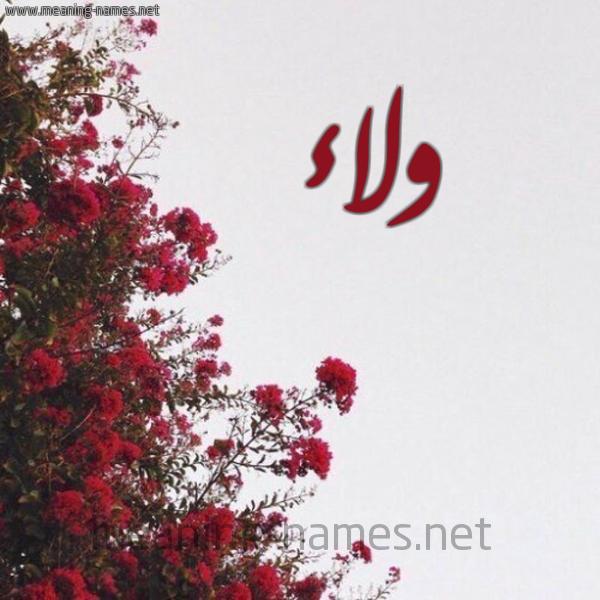 ولاء شكل 18 صوره الورد الأحمر للإسم بخط رقعة كتابة على الورد 2021