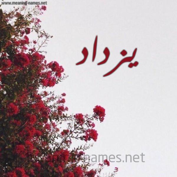صورة اسم يزداد Yzdad شكل 18 صوره الورد الأحمر للإسم بخط رقعة