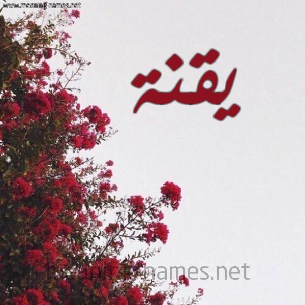 صورة اسم يقنة Yqnh شكل 18 صوره الورد الأحمر للإسم بخط رقعة
