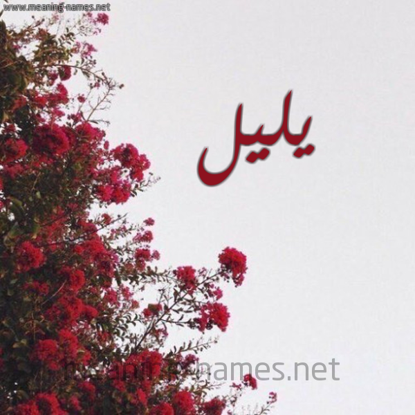 صورة اسم يليل Ylyl شكل 18 صوره الورد الأحمر للإسم بخط رقعة