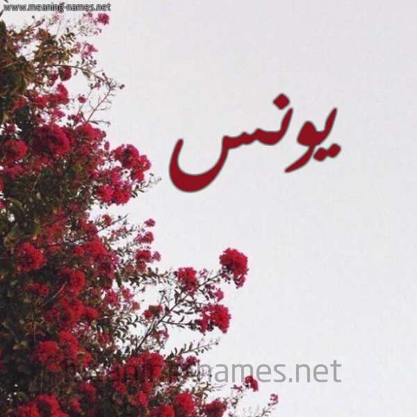 صورة اسم يونس Younes شكل 18 صوره الورد الأحمر للإسم بخط رقعة