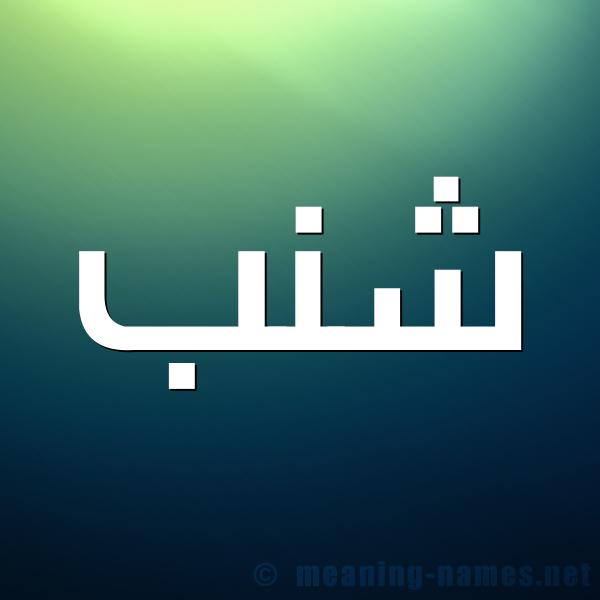 صورة اسم شنب SHNB شكل 1 صوره للإسم بخط عريض